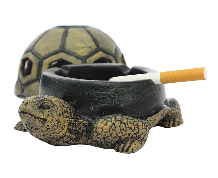 Cute Turtle Ashtray Get it now from: http://ashtrayparadise.siterubix.com/cute-turtle-ashtray
