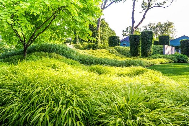project by Land Morphology includes 10,000 plugs of bamboo grass in four shades. With the addition of clipped hornbeam pillars, the rolling berm recalls a giant caterpillar.