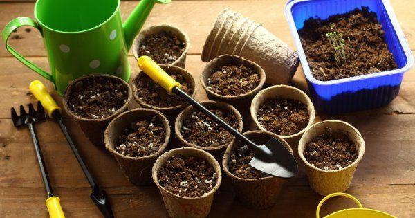 Уже в самом начале весны цветоводы начинают планировать, что посадить в цветник. Поскольку многие однолетние растения проходят продолжительный период развития, выращивать их лучше через рассаду. Для этого нужно знать, когда именно приступать к посеву семян.
