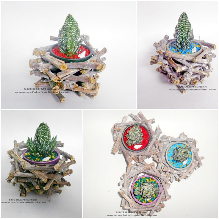 suculente in vase ceramice si cadre impletite