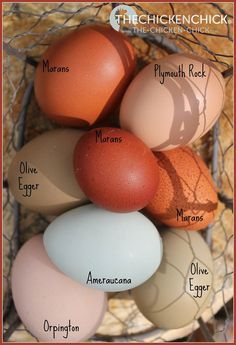 Eggs by breed via The Chicken Chick on Facebook. http://www.The-Chicken-Chick.com
