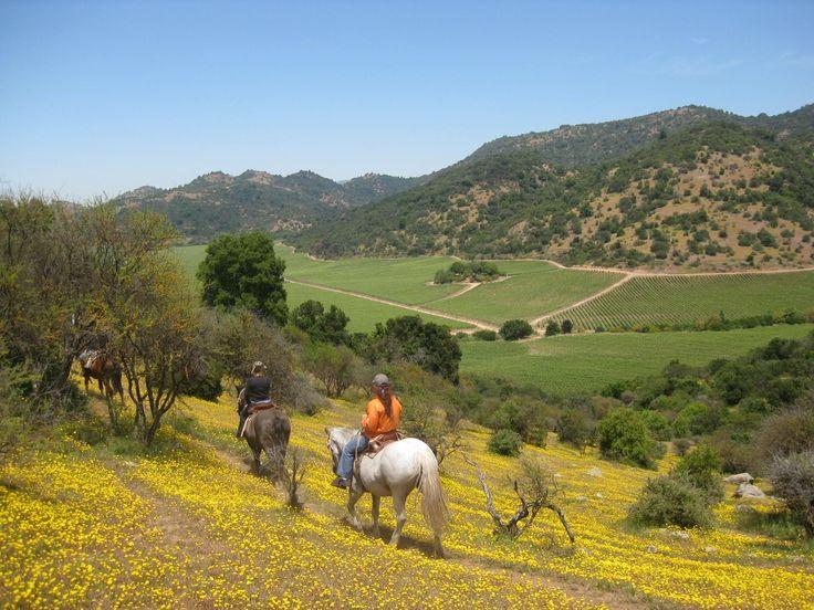 ruta del vino, Colchagua, Chile