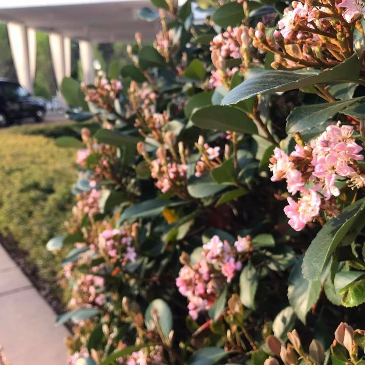 We're loving this weather and the new color in our gardens! | Proximity Hotel | Greensboro, NC