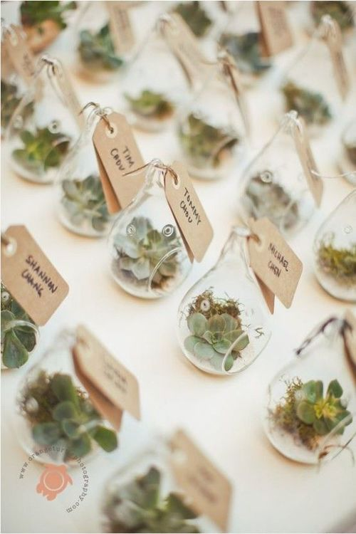 The Ultimate Succulent Wedding Guide - Favors