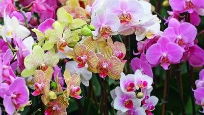 Today we tell about the beauty and science of orchids, some of nature's most interesting flowers.  More at https://www.facebook.com/HanamiJewelry?fref=ts