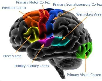 Basic Cognitive Neuroscience Diseases Cognitive neuroscience is the study of the neurobiological substrates which is responsible for human cognition and seeks to reveal the neural circuits hidden in the human mental processes. This included learning...