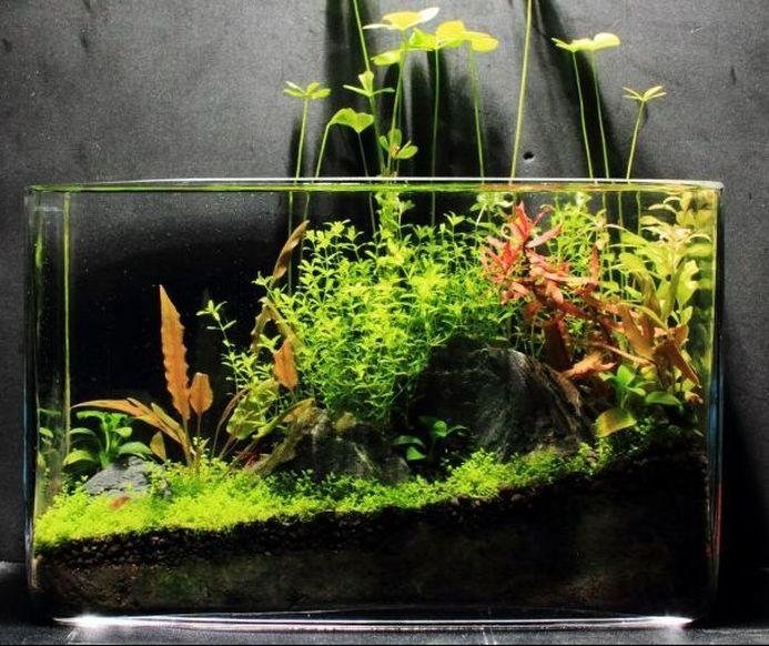 Picture Planted Aquarium Large Plants Indoor Water Garden