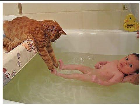 Юмор.Приколы с кошками.Funny cats.