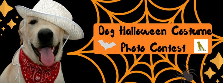 Halloween Costume Contest--Madison Animal Care Hospital--Facebook