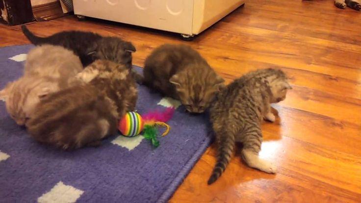 Kittens less than three weeks, Котятам неполных три недели