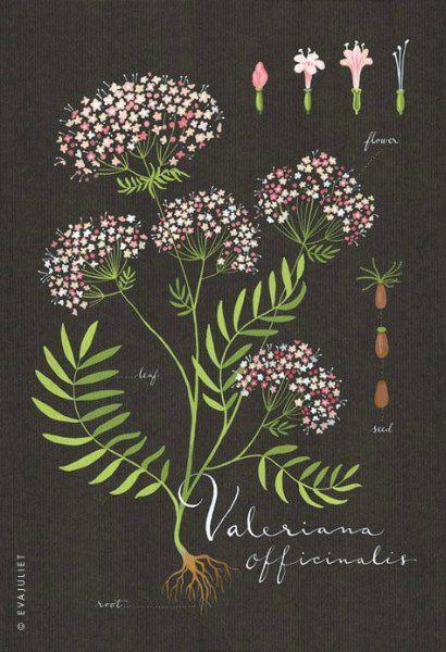 Ботаникам, скучающим по лету- цветочное вдохновение