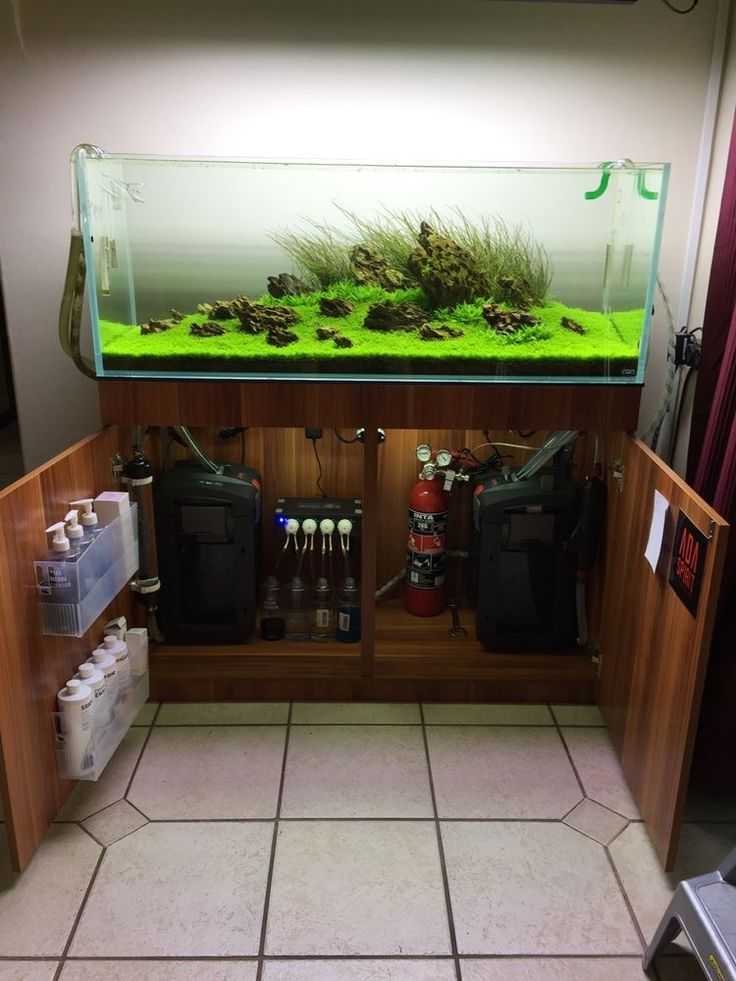 Oltre 25 fantastiche idee su acquari pesci su pinterest for Decoration zen aquarium