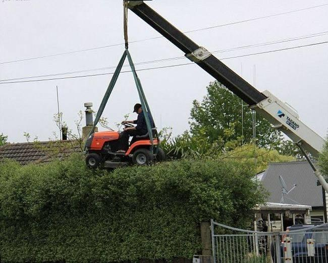Trimming the Bush for real man.