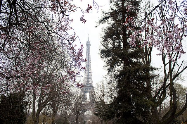 Eiffel Tower Springtime | ... _Paris - The Eiffel Tower in Spring | Flickr - Photo Sharing
