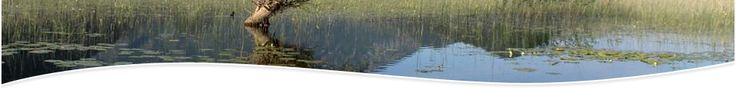 February 2 - World Wetlands Day - we need to preserve our wetlands a vital part of our planet and habitat to numerous critters.