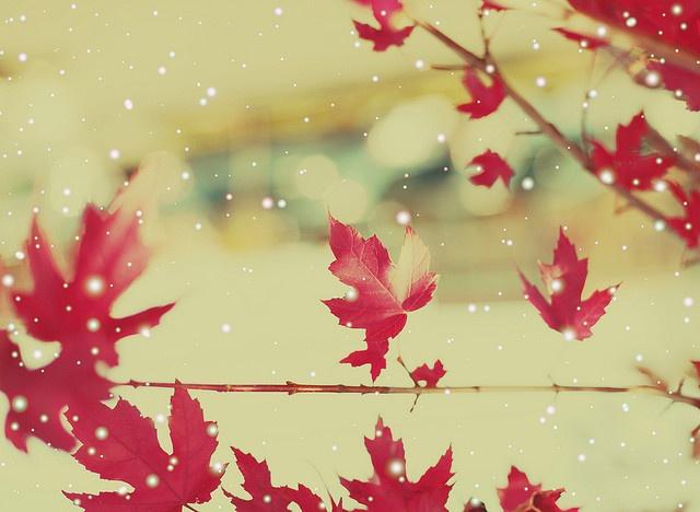 autumn gorgeousness.