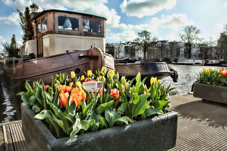 Tulips on the Canal