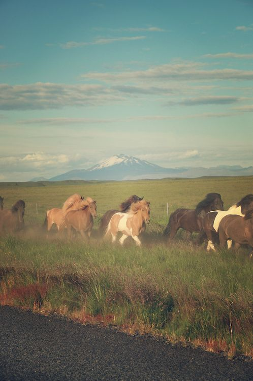 Wild Horses <3