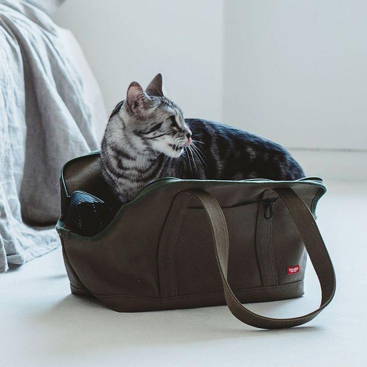 【楽天市場】猫のキャリーバッグネコ用 carry bag スクエアトート Mサイズ【キャリーバック free stitch】:free stitch