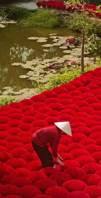 Making red incense, Vietnam