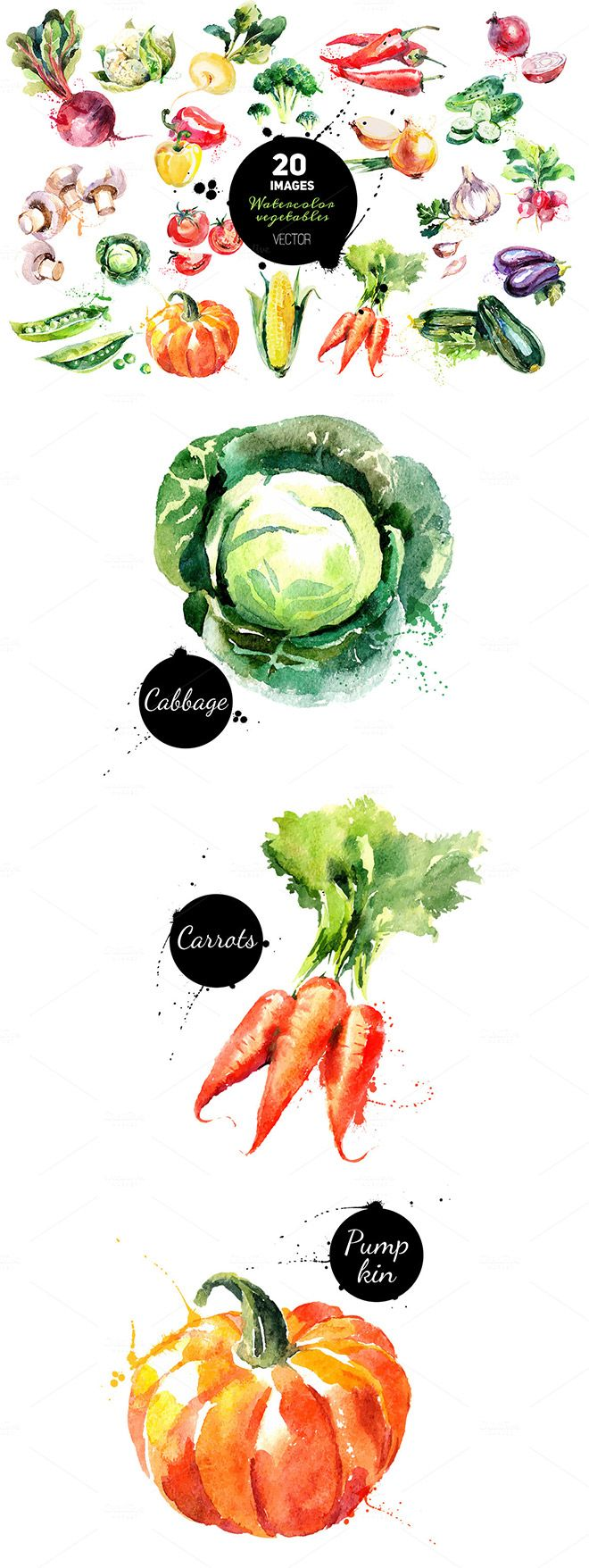 Set of 20 hand drawn watercolor vegetables. Traced vector illustrations and jpegs.