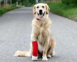 The 10 most common pet injuries