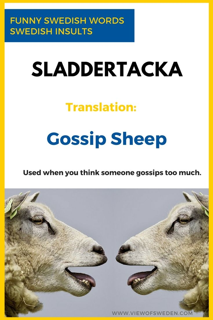 Funny Swedish Words with English Translations. Someone who gossips too much is called a Sladdertacka in Sweden. Sladder = Gossip Tacka = Female Sheep (Ewe).