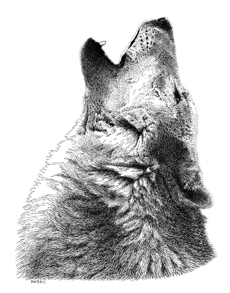 Pen and Ink Art Gallery | ... Wolf - Gallery Pen and Ink Drawings By scottwoyak - Artist Rendezvous