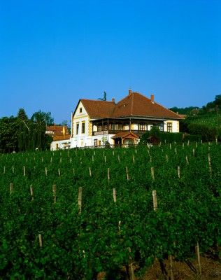 Farm land in front of a house, Badacsony, Hungary