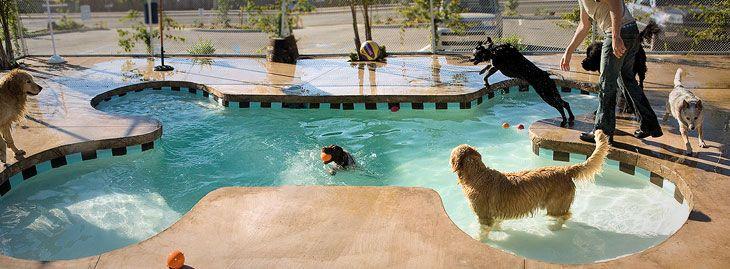 Dog Boarding & Daycare in Santa Barbara, CA - DIOJI K-9 Resort & Athletic Club