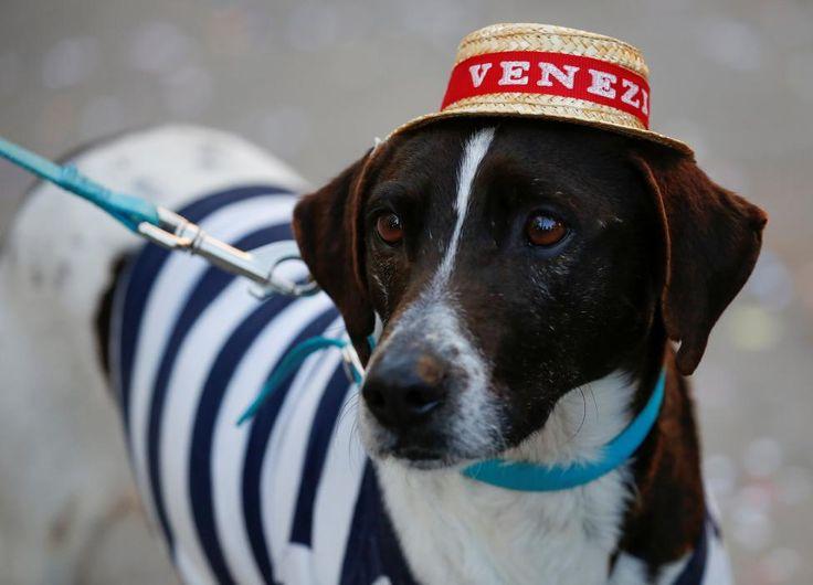 Dog wearing a gondolier cap