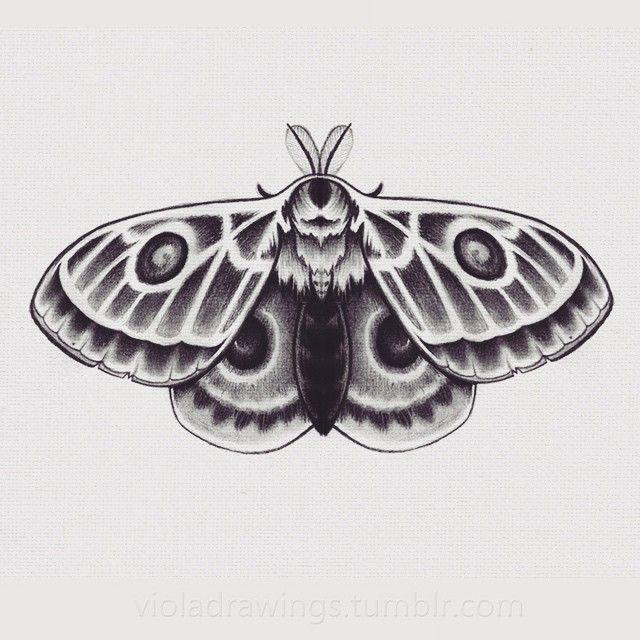Moth drawing - photo#46