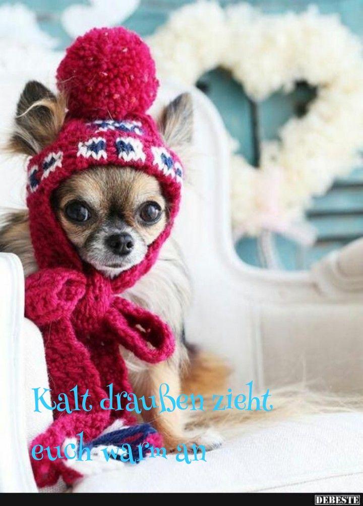 Pin Von Kathi Auf Guten Morgen Dogs Cute Chihuahua Und Pets