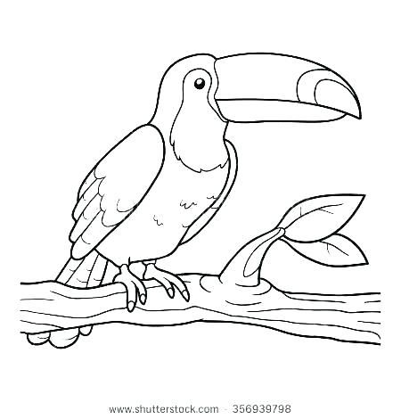 toucan coloring pages colors coloring pages printable