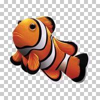 Popular : Clownfish
