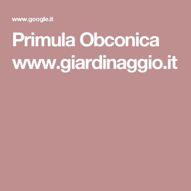 Primula Obconica www.giardinaggio.it