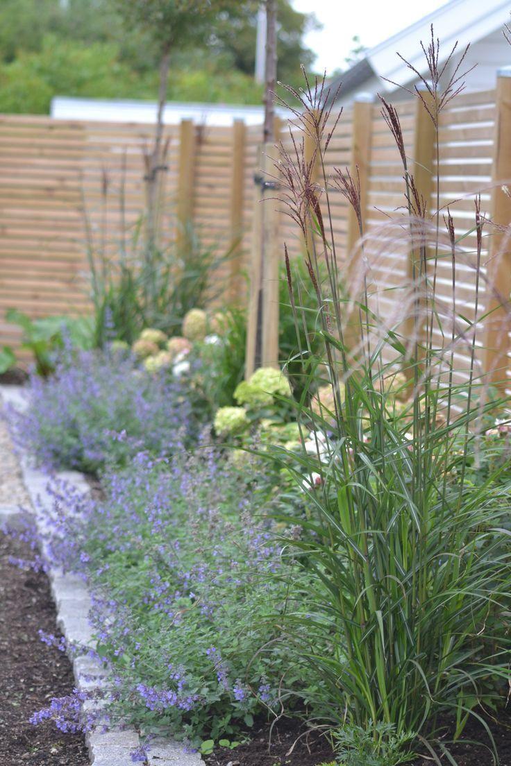 Alias Bleues Catmint Fleurs Hautes Herbes Larriere Lavant Nepeta Small Garden Ideas Vorgarten Ideen Gartengestaltung Landschaftsbau Ideen