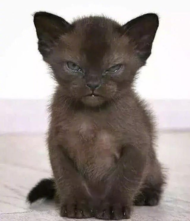 Cute Kitten Haveaniceday Onmyway Cutest Kittens Ever Kittens Cutest Black Cat Art