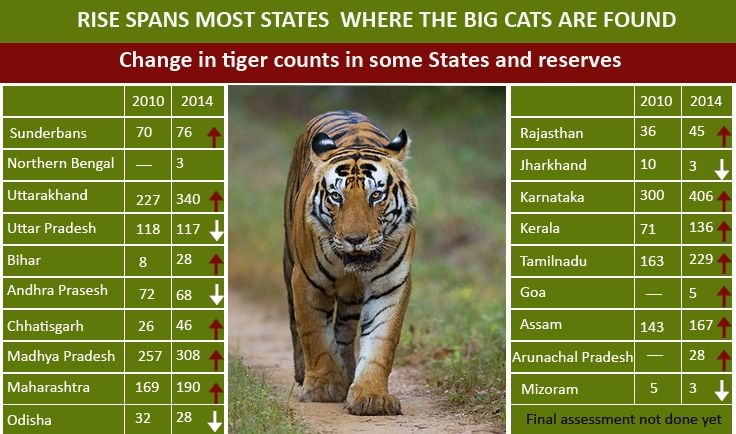 With Increase in Tiger Population in India, Tourists Thronging Tiger Reserves in Huge Numbers