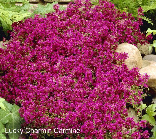 14 Best Tiered Gardens Images On Pinterest Tiered Garden