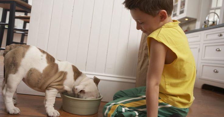 Efectos posteriores de la desparasitación en los perros. Los medicamentos para la desparasitación, también llamados antihelmínticos, son generalmente seguros para utilizarlos en los animales saludables. Sin embargo, algunos perros pueden experimentar efectos secundarios negativos, especialmente si la infección de parásitos es severa. Los efectos secundarios severos por los antihelmínticos son una ...