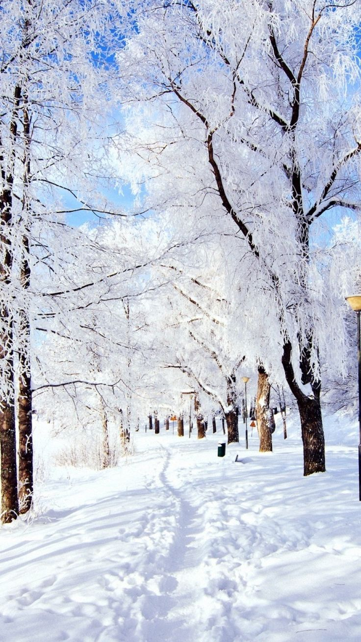 trail, trees, snow, frost, day, winter