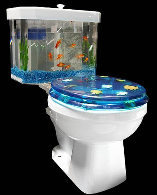 Toilet aquarium? YES.