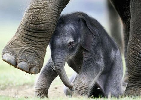 There are many species of elephant, some of which are endangered due to hunting of ivory. Let's stop the exploitation of elephants in any way.