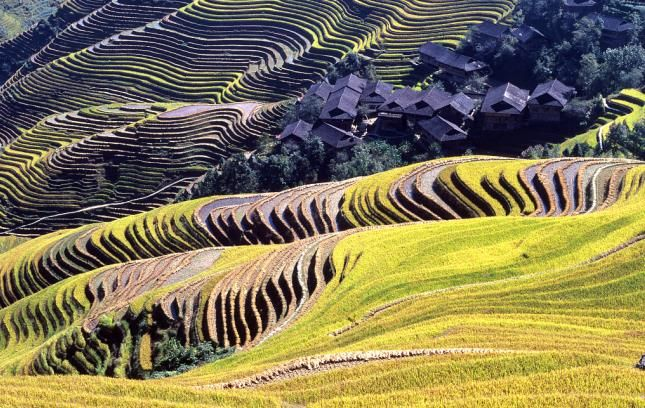 Four Chinese sites selected as global agricultural heritages, including the Longji Terraces in Longsheng County, south China's Guangxi Zhuang Autonomous Region.