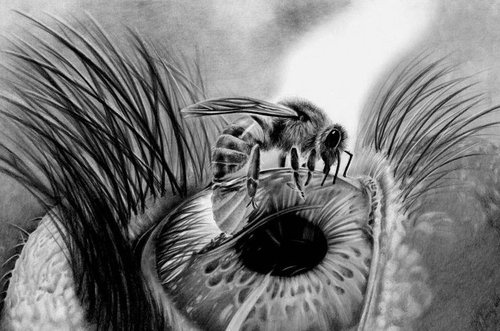 Pencil drawings by Paula Bird. | strange | Pinterest ...