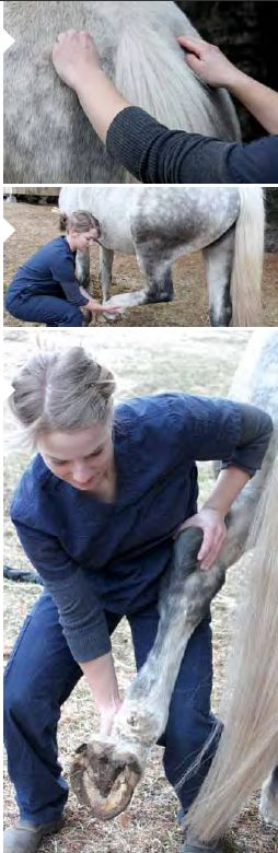 729 best Horses, horses, horses images on Pinterest - equine release form