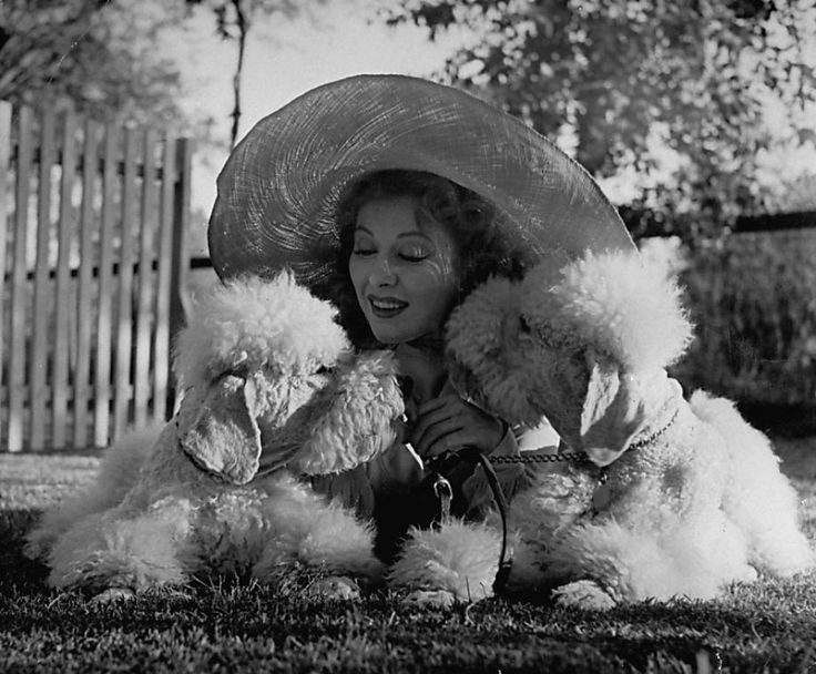 best the lady the tramp images animals greer garson cuddling her two white standard poodles