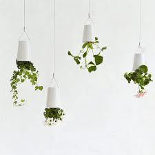 sky plantern