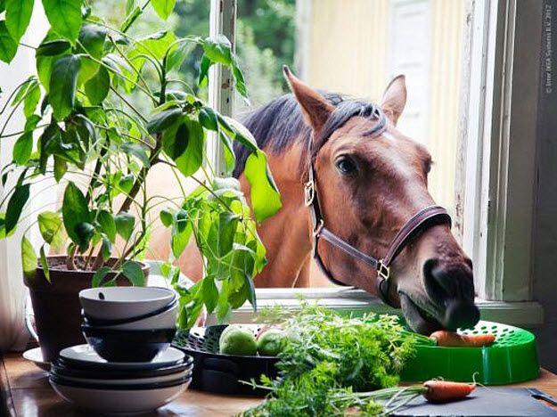nyamm: Kitchens Window, Ikea Ps, Beautiful Hors, Horses, Funny Hors, Carrots, House, Photo, Animal